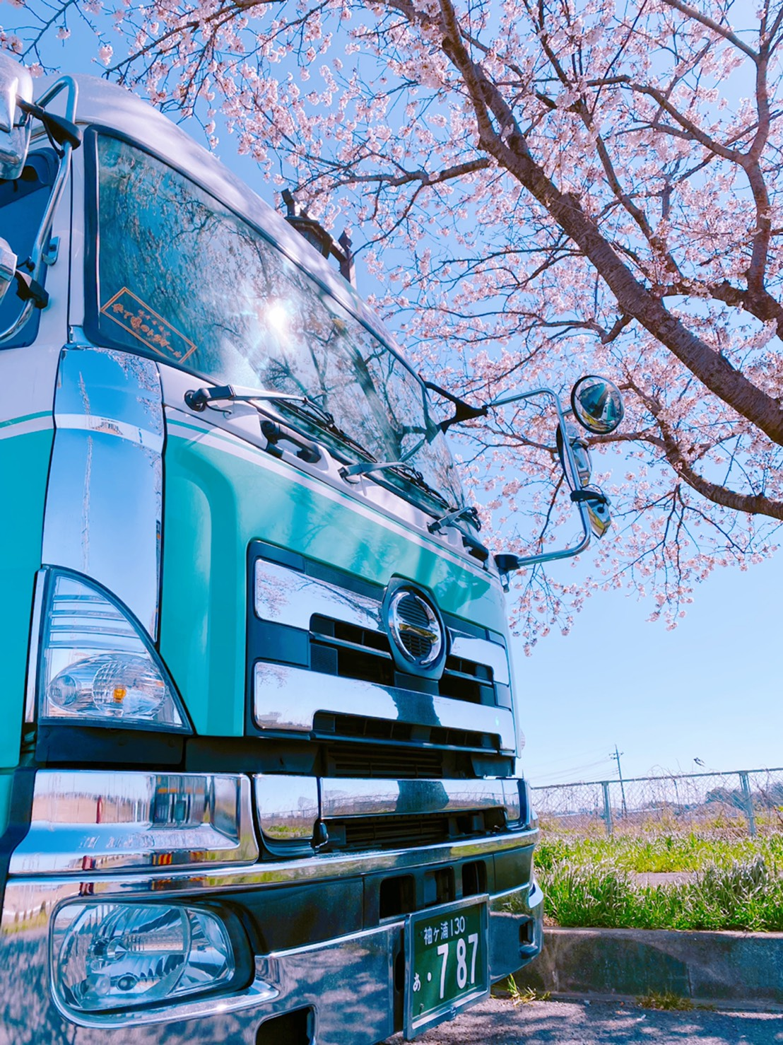 トラック 桜