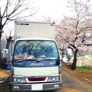 lady5_トラック_桜2
