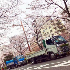 lady5_トラック_桜3