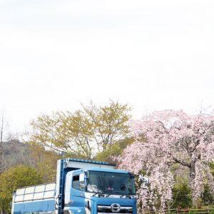 lady5_sakura